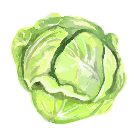 kale: Watercolor isolated cabbage on white background. Fresh and healthy fruit with vitamins. Natural vegan food. Illustration