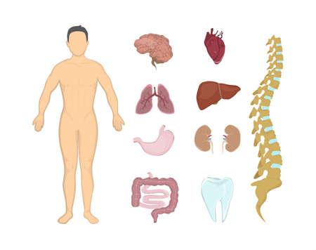 anatomía humana entera. Todos los sistemas del cuerpo humano como cuerpo, órganos y músculos.