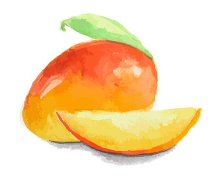 Isolated watercolor mango on white background. Fresh and sweet trpopical fruit.
