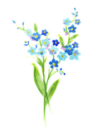 Watercolor blue pansies on white background. Beautiful and fragile flowers for decoration.