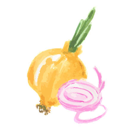 Isolated watercolor onion on white background. Healthy and tasty vegetable with vitamins. Illustration