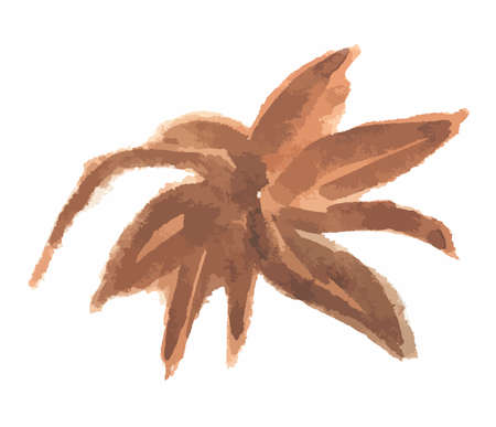 aromatic: Isolated star anise on white background. Food seasoning and aromatherapy. Asian aromatic herb. Illustration