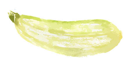 courgette: Isolated watercolor zucchini on white background. Healthy and fresh vegetable with vitamins.
