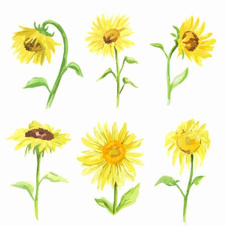 水彩画ひまわり背景白に設定します。夏の花。美しい庭の図。