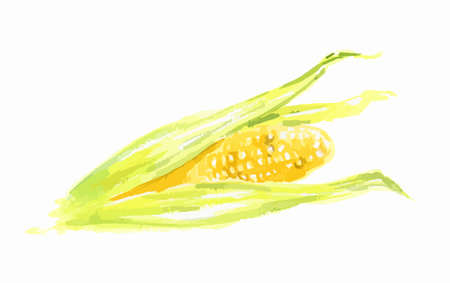 Isolated watercolor corn on white background. Sweet and healthy vegetable. Organic and vegetarian nutrition. Illustration