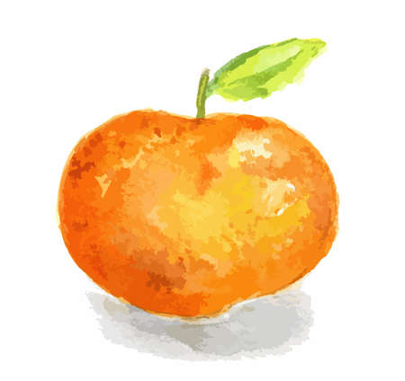 Isolated watercolor orange on white background. Fresh and sour citrus tropical fruit.