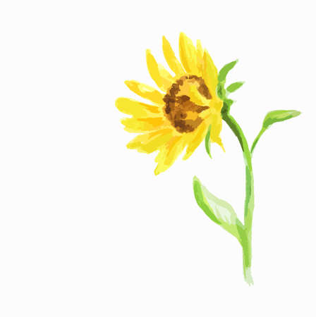 beautiful garden: Isolated watercolor sunflower on white background. Summer flower. Beautiful garden illustration.
