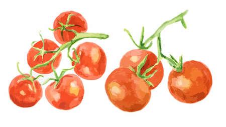 水彩トマトは、白い背景に設定します。料理と装飾のため健康と熟した新鮮な野菜。