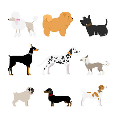 doberman: Isolated dogs set on white background. Beautiful and smart dogs as dalmatian, doberman, pug and more.