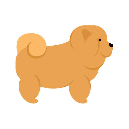 chow: Chow chow dog. Isolated purebred dog standing on white background. Illustration