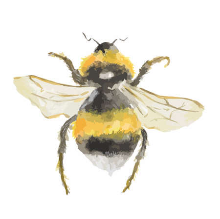 Isolated watercolor bee on white background. Dangerous insect.