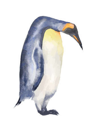 antarctic: Isolated watercolor penguin on white background. Antarctic animals.