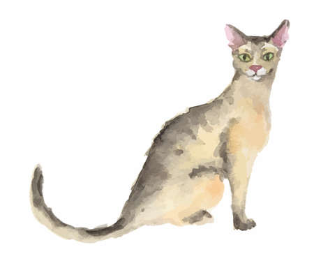 Isolated watercolor cat sitting on white background. Abyssinian.