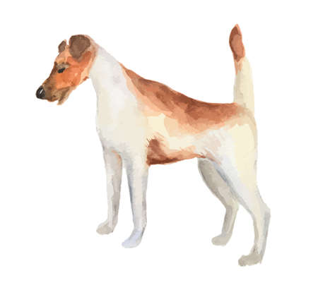Isolated watercolor dog standing on white background. Fox-terrier.