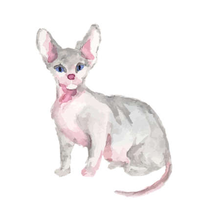 Isolated watercolor cat sitting on white background. sphinx