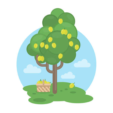 Isolated lemon tree with basket. Concept of harvest, fresh fruits and gardening.