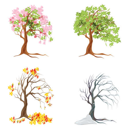 Four seasons trees on white background. Summer, spring, fall and winter.