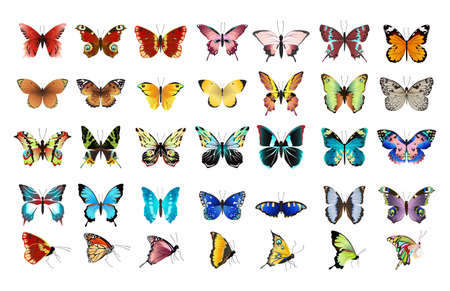 Beautiful colorful butterflies set on white background. Illustration