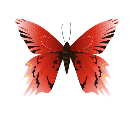 admiral: Isolated beautiful butterfly on white background. Red and black colors.