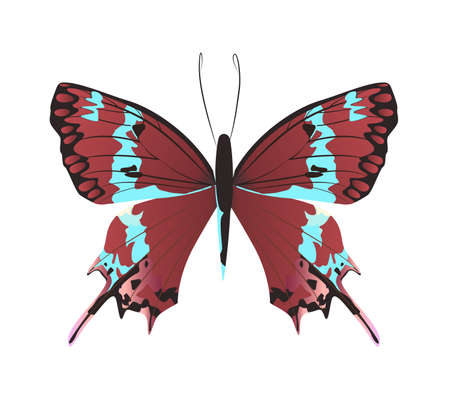 admiral: Isolated beautiful butterfly on white background. Red and turquoise colors.