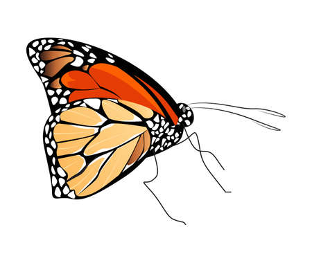 Isolated beautiful butterfly on white background. Red and brown colors. Side view. Illustration
