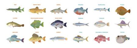 Flussfischset. Isolierte Fische auf weißem Hintergrund. Standard-Bild - 76937742