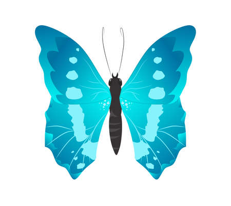 Isolated beautiful butterfly on white background. Blue colors. Illustration
