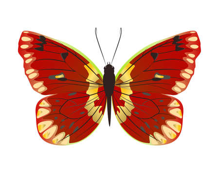 admiral: Isolated beautiful butterfly on white background. Red and yellow colors.