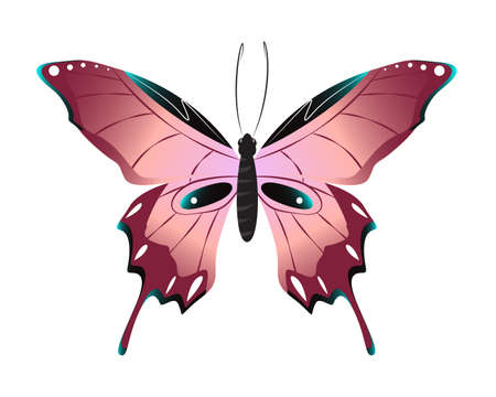 admiral: Isolated beautiful butterfly on white background. Pink colors.