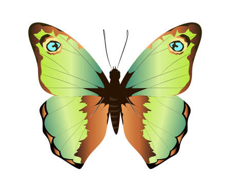 admiral: Isolated beautiful butterfly on white background. Green and brown colors.