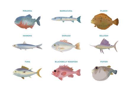 Sea fish set on white background. Dorado, tuna and herring.