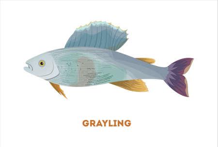 Isolated grayling fish on white background. Fresh food. Illustration