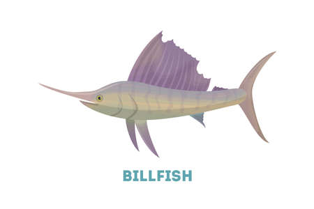 billfish: Isolated marlin fish on white background. Seafood.