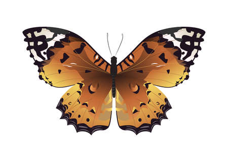 admiral: Isolated beautiful butterfly on white background. Brown colors.