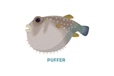 funny pictures: Isolated puffer fish. Stock Photo