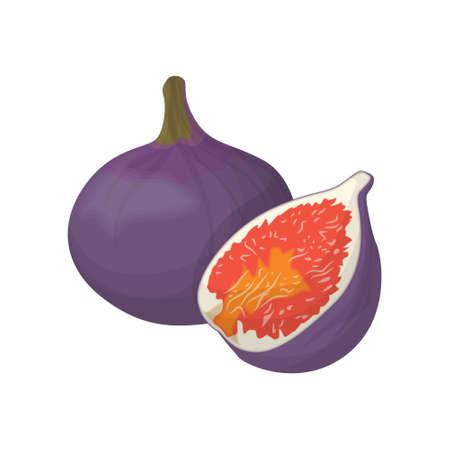 Isolated fig fruits. Illustration