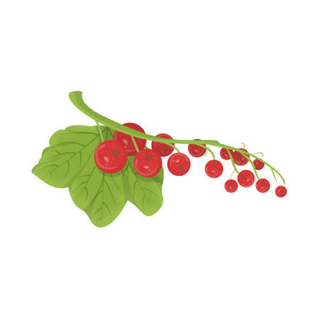 Isolated red currant.