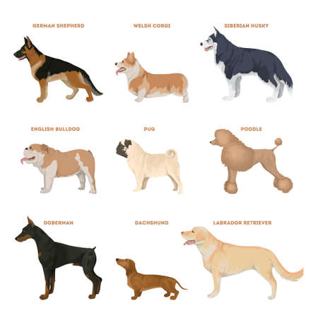 Dog breeds set. Illustration of dogs like pug, corgi and more.