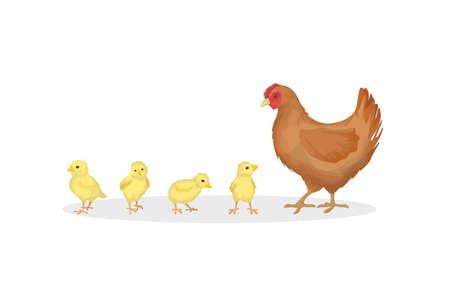 Hen with chicks on white background. Farm animals.