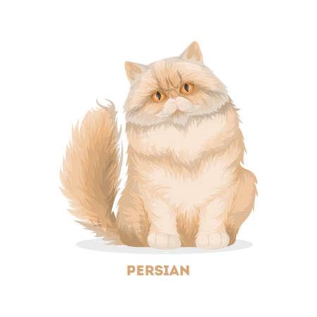 Isolierte persische Katze.