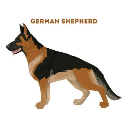 ジャーマン ・ シェパード犬。  イラスト・ベクター素材