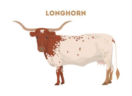 격리 된 longhorn 암소입니다.