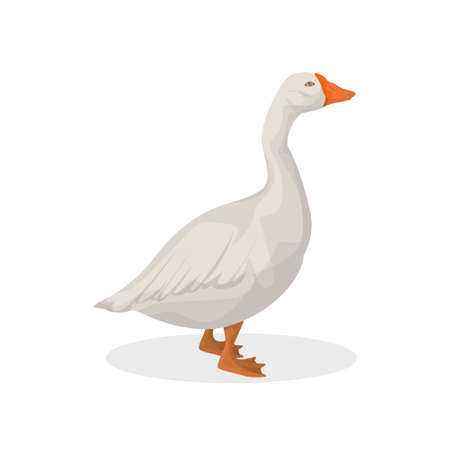 Isolated farm goose. Ilustracja
