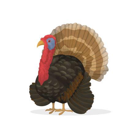 thanksgiving day symbol: Tacchino isolato fattoria.