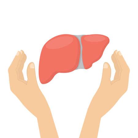 donacion de organos: Hígado en las manos.