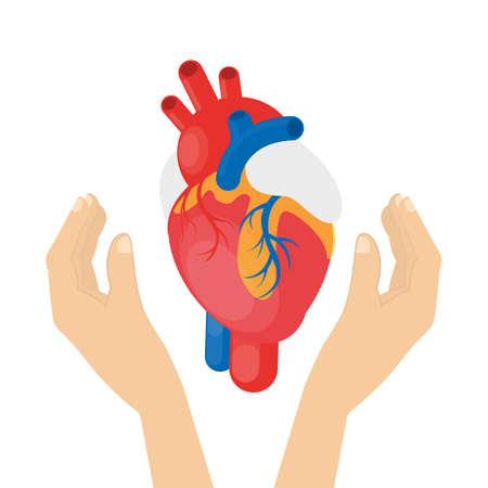 donacion de organos: Corazón en las manos.