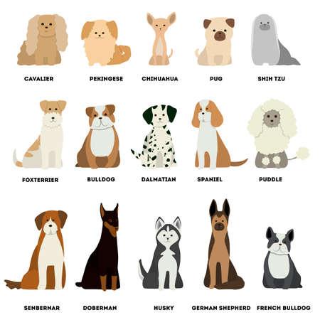 Dog breed set on white background. Dalmatian and dachshund, pug and husky.