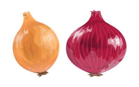 Red and orange onion. Illustration