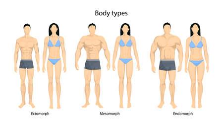 Menselijke lichaamstypes Stock Illustratie