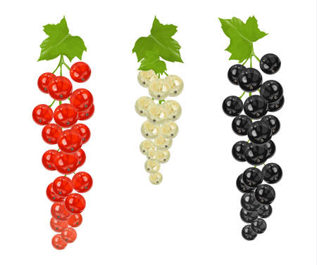Isolated currant set. Black, white and red currant